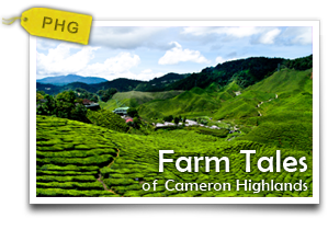 Farm Tales of Cameron Highlands-A day of farm exploration and discoveries