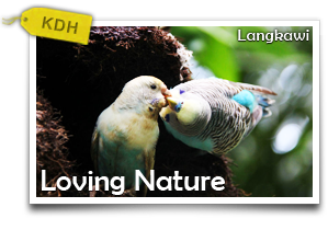 Loving Nature at Langkawi		 -Returning To The Simple Life In One Day!