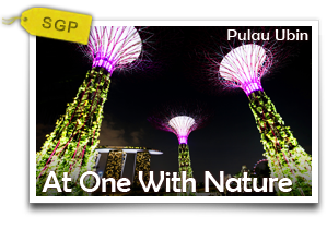 At One With Nature Pulau Ubin	-Outdoor Wonders In A Rustic Enclave